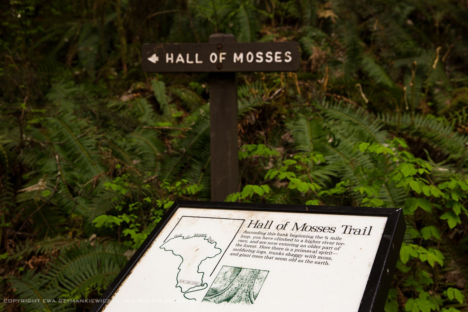 Hal of Mosses, Hoh Rain Forest, Olympic National Park