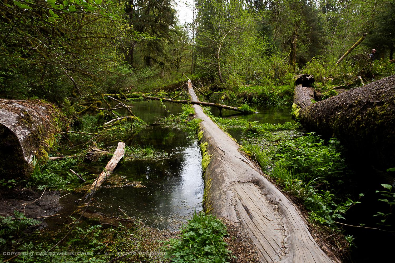 Hoh Rain Forest, Olympic National Park