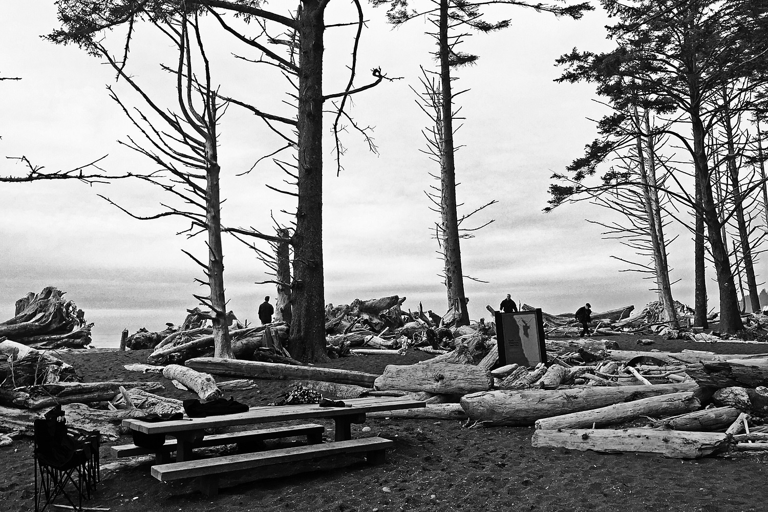 Rialto Beach picnic area, Olympic National Park, WA, USA