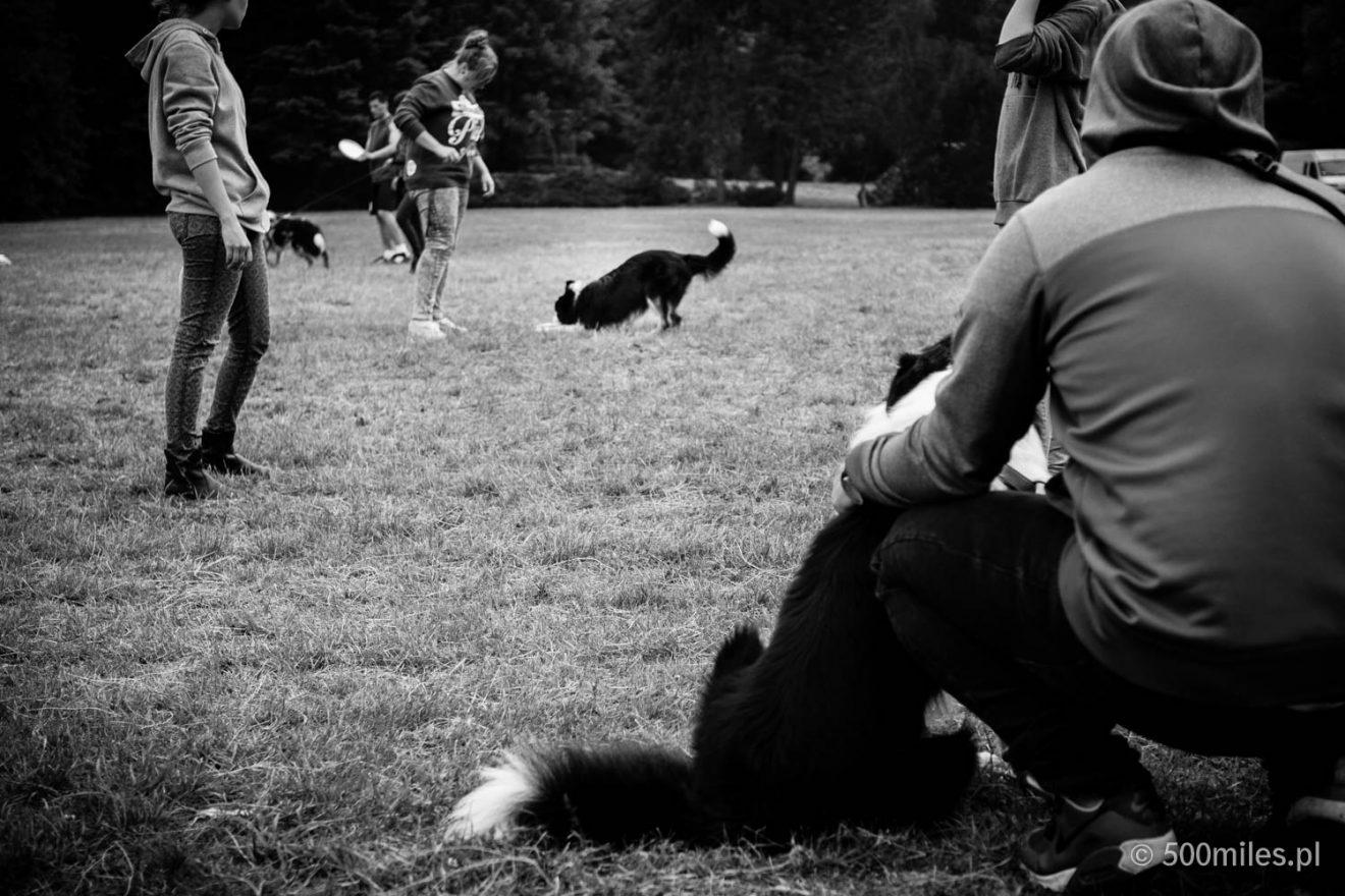 Flying Dogs (Latające Psy) 2015