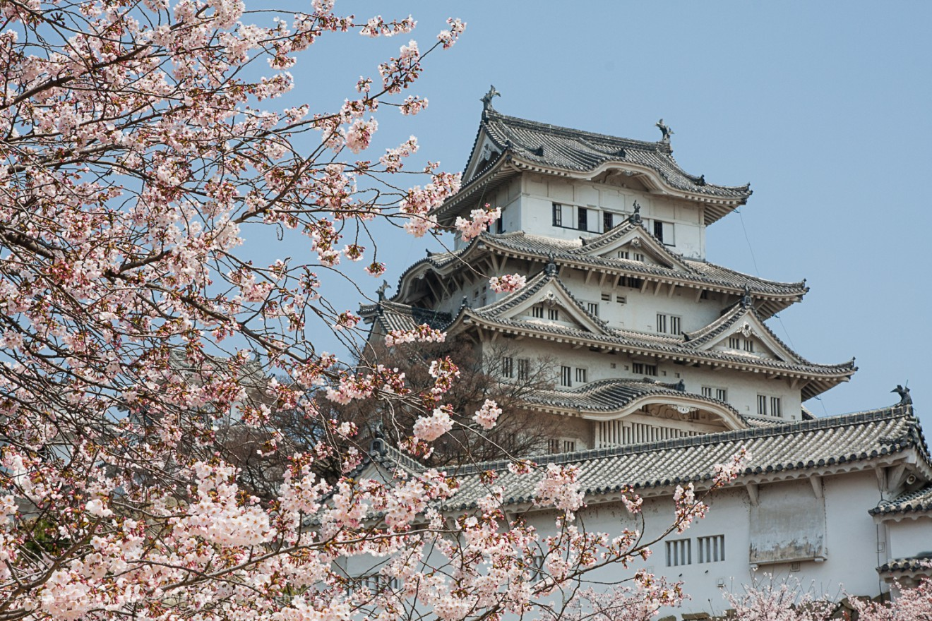 Cherry blossom at the Himeji Castle, Japan