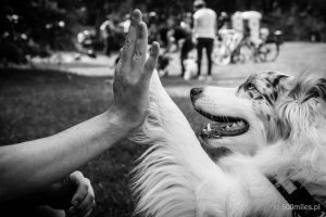 Kejtrówka 2017, Latające Psy, High Five